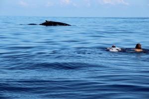 PMT avec les baleines