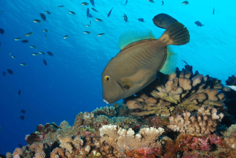 Plongez avec Reunion Diving