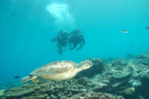 bapteme de plongée La Réunion