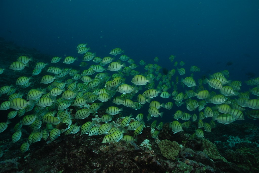 fond sous marin réunion