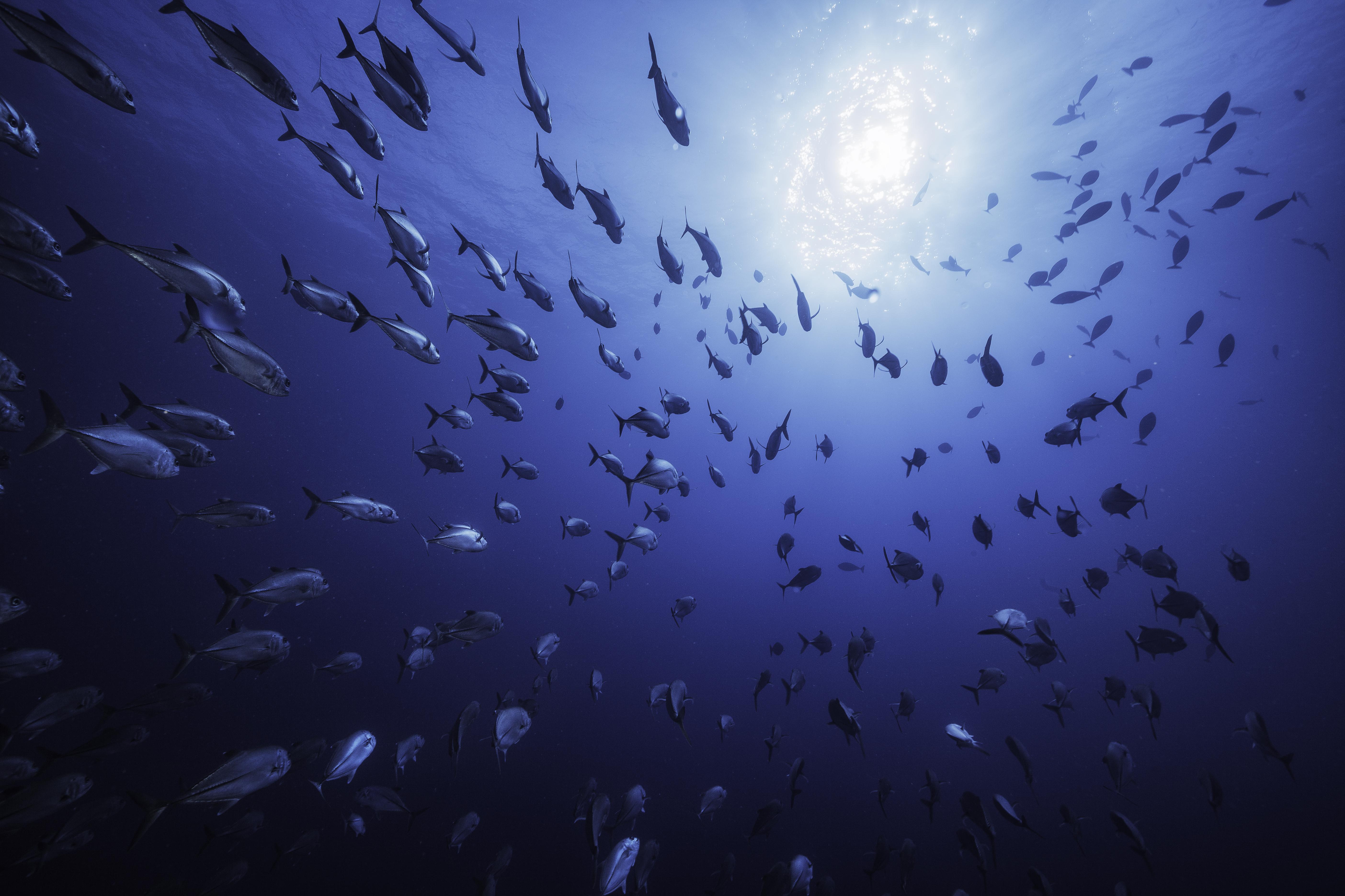 Reunion Underwater